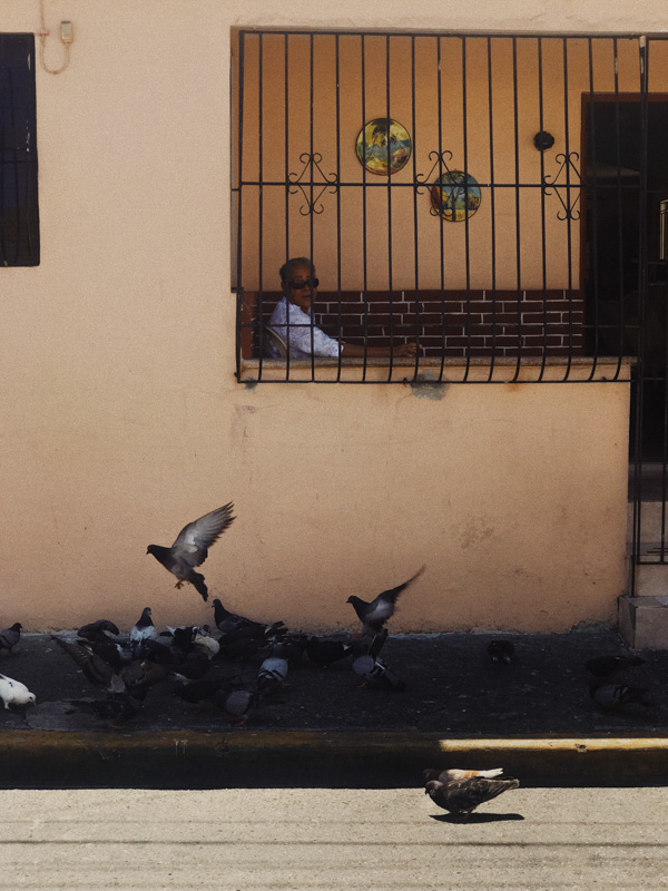 A person on their terrace behind a metal gate with a flock of pigeons in front of their house in the Dominican Republic