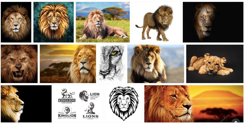 Koláž z fotografií se lvem, které jsme našli na fotobance Depositphotos. Celkem patnáct povedených fotek s králem džungle.
