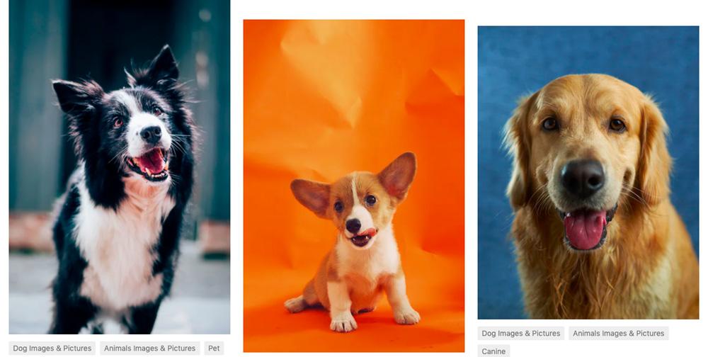 """Tři fotografie psů, které se objeví na free fotobance Unsplash po zadání výrazu """"dog""""."""