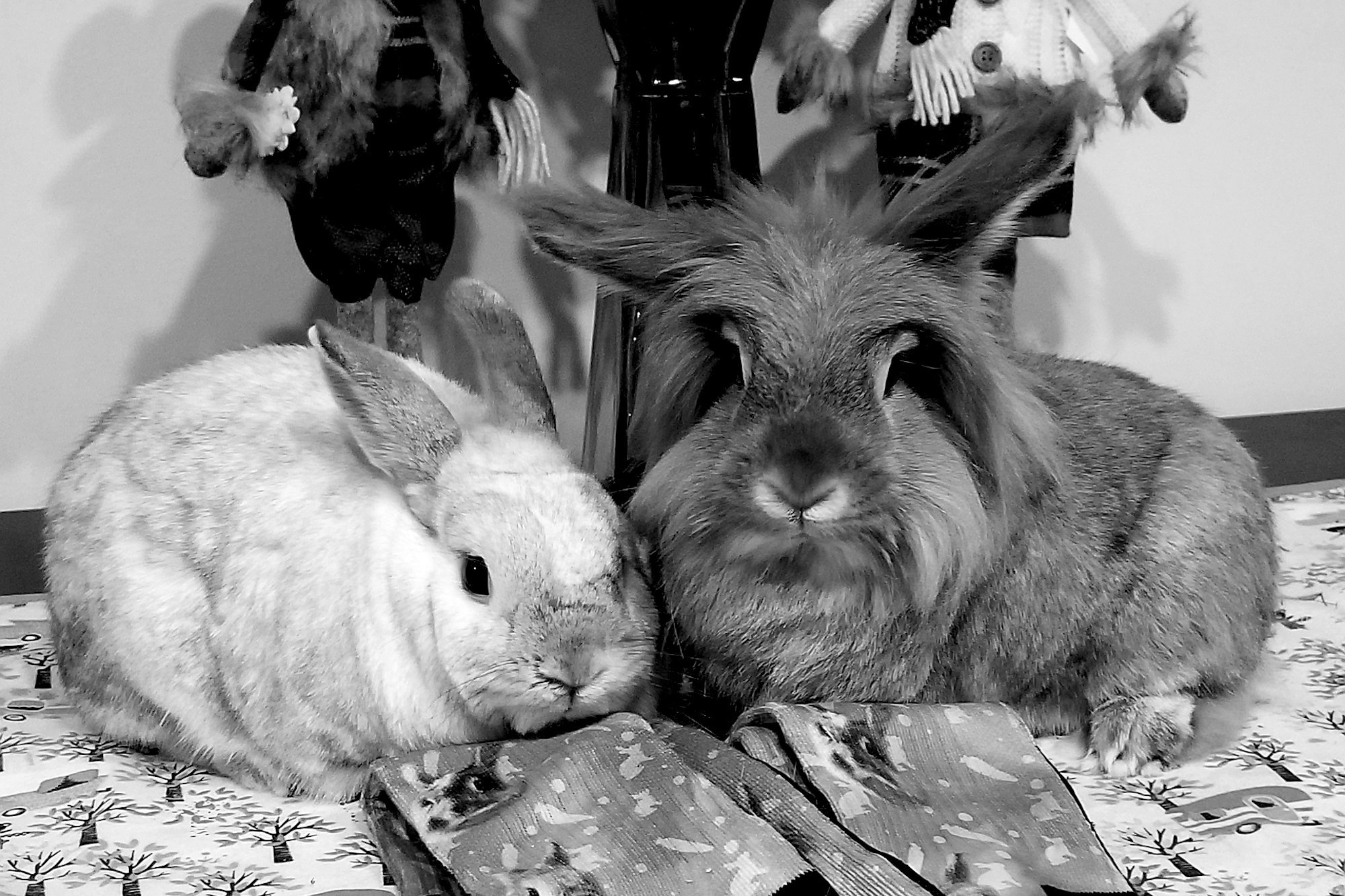 Most handsome bunnies in Portland Oregon