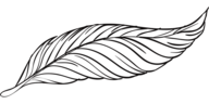 Outline of a Black Feather