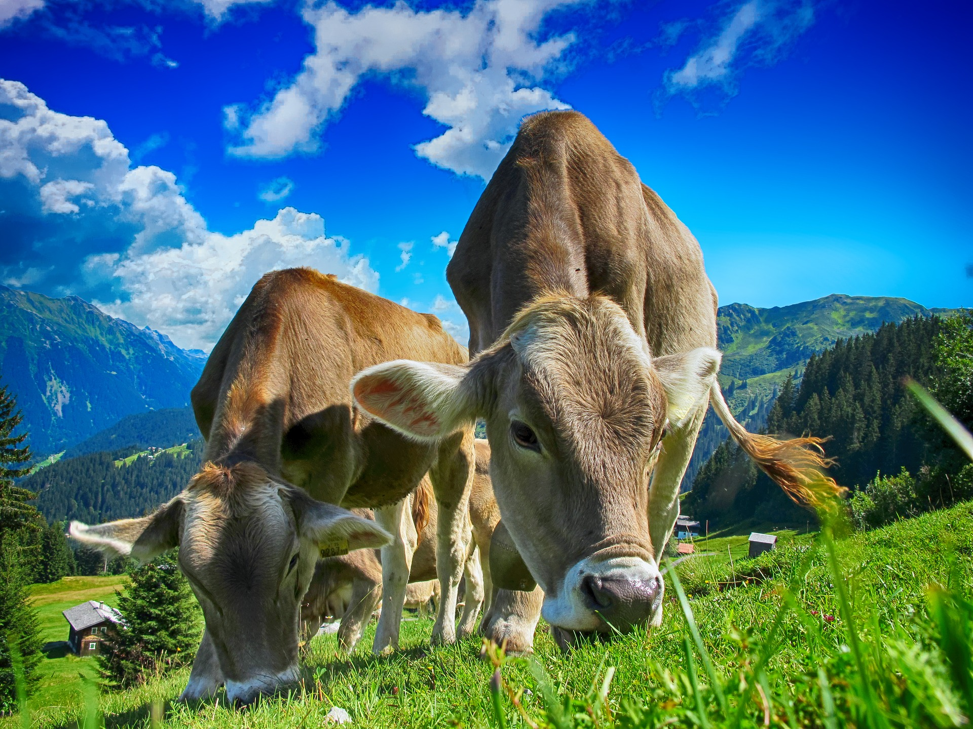302,050 cows in low earth orbit - and other ways to quantify data