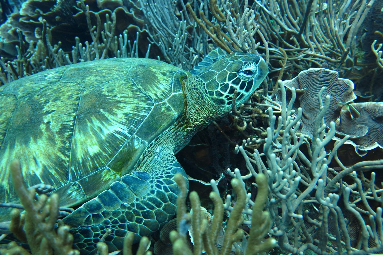 Sea Turtles are a regular sight