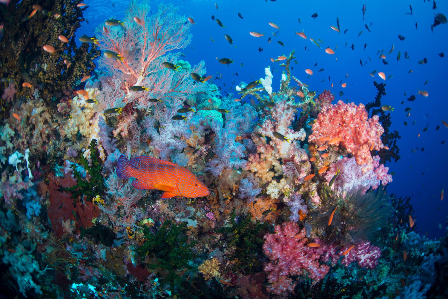 Enjoy the vivid colours of the coral and wildlife on the reefs