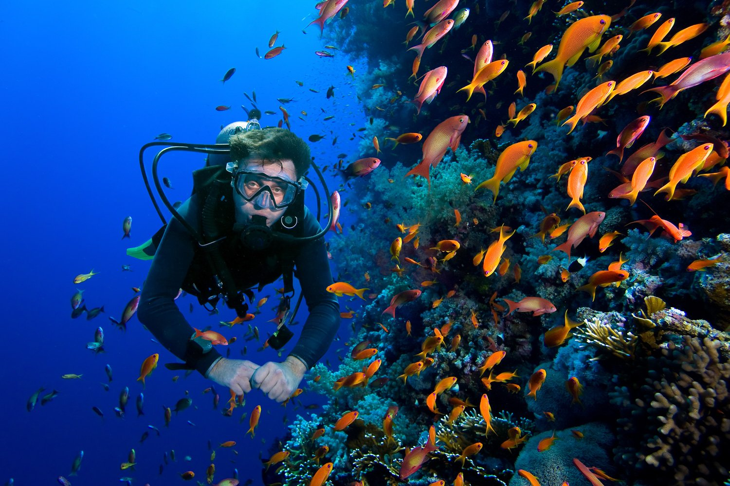 See some incredible sights whilst diving off Tiger Blue