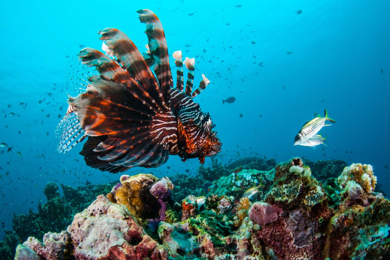 Spectacular marine life