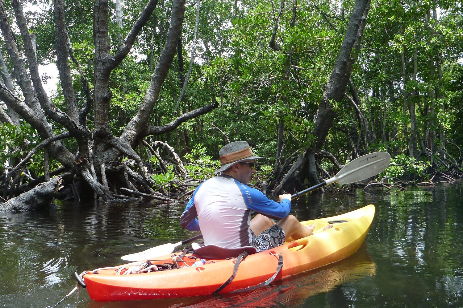 Explore the mangroves and waterways in a kayak