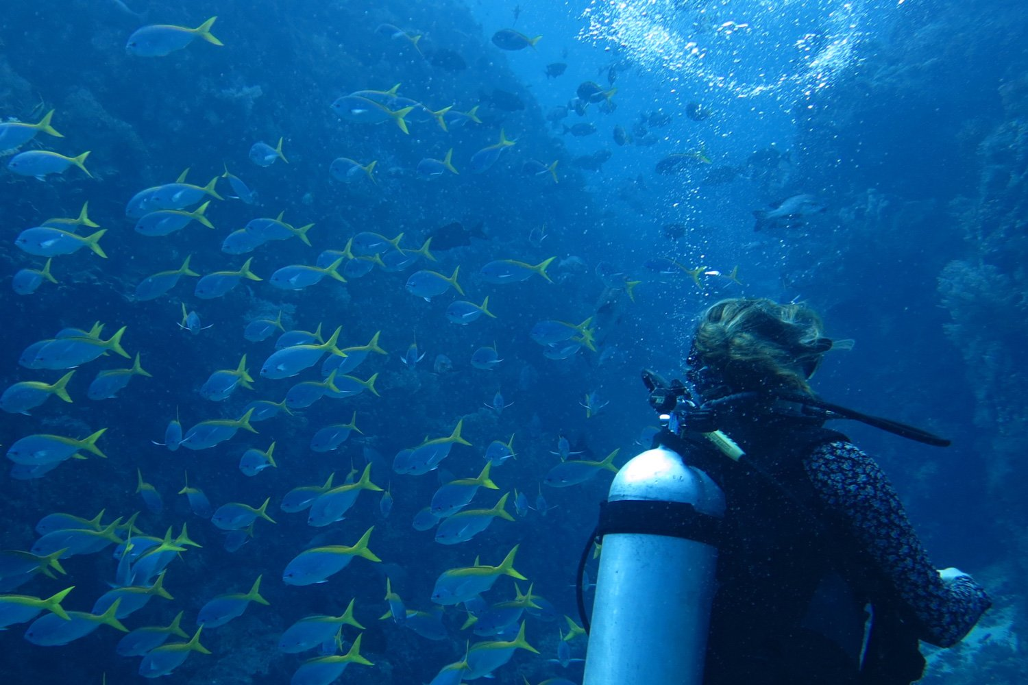 Diving amongst a school of fish