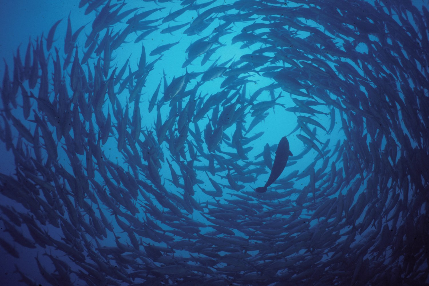 Witness large schools of fish