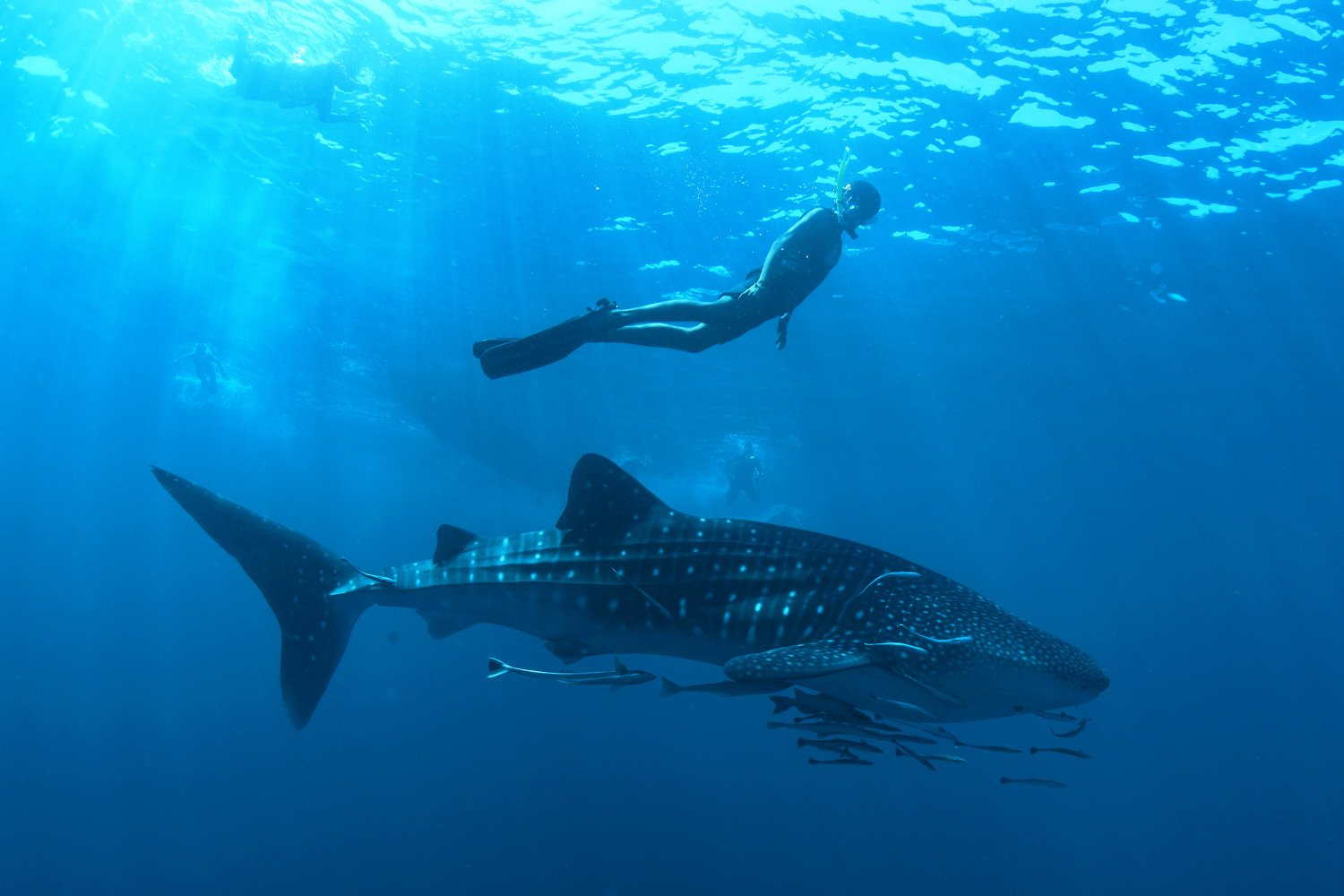 There is always the chance of an encounter with a Whale Shark