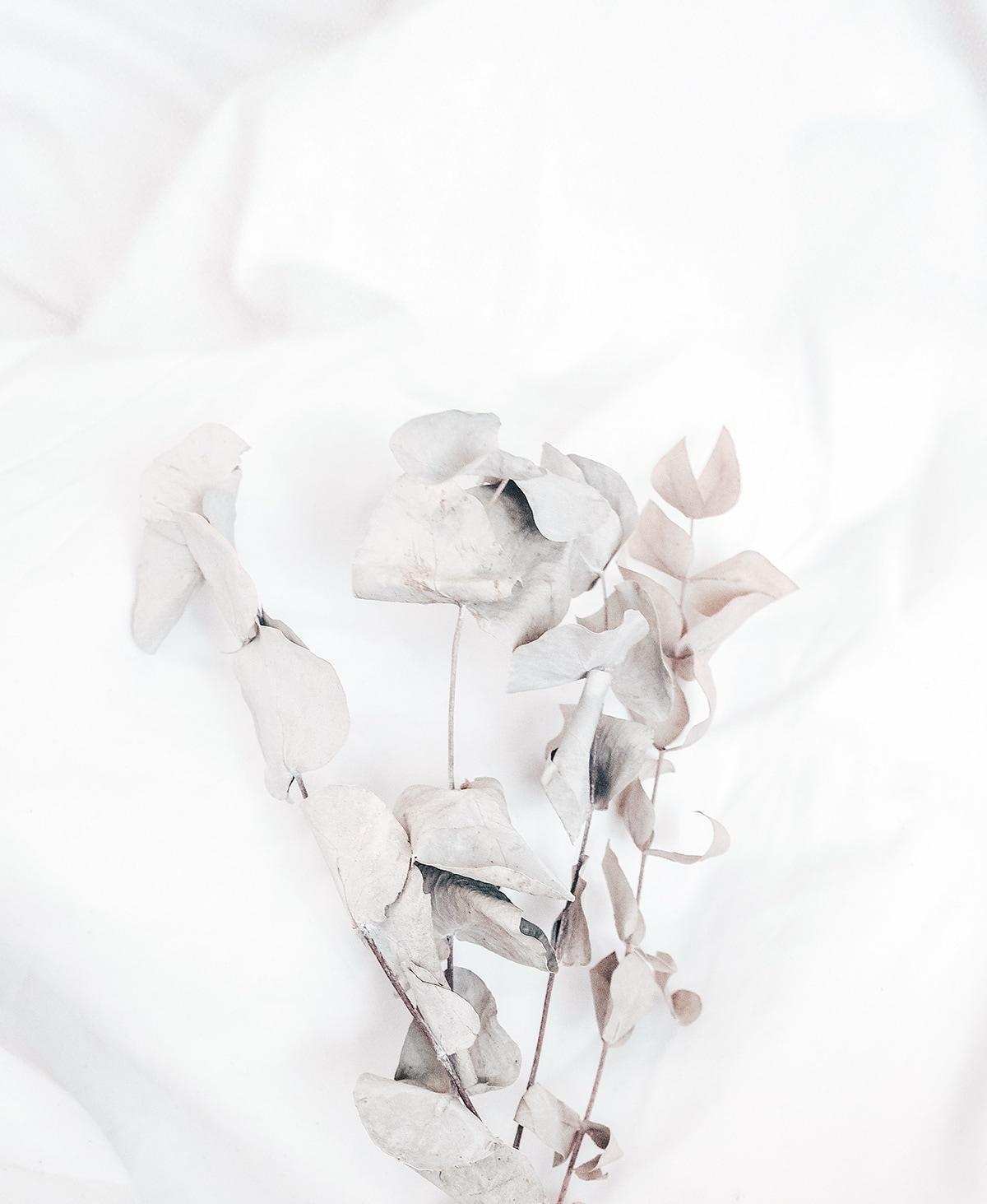 getrocknete Eukalyptusblätter auf Daunendecke mit weißer Bettwäsche