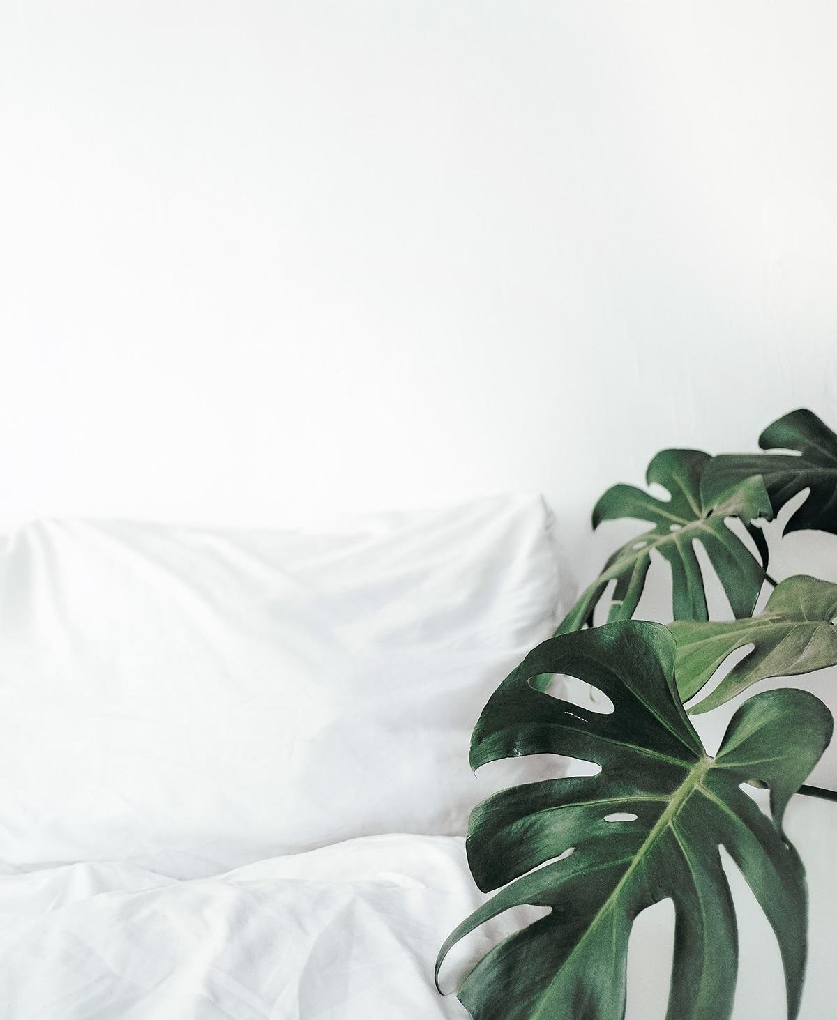 Daunendecke und Federkissen in weißer Bettwäsche mit zwei Monstera Blättern