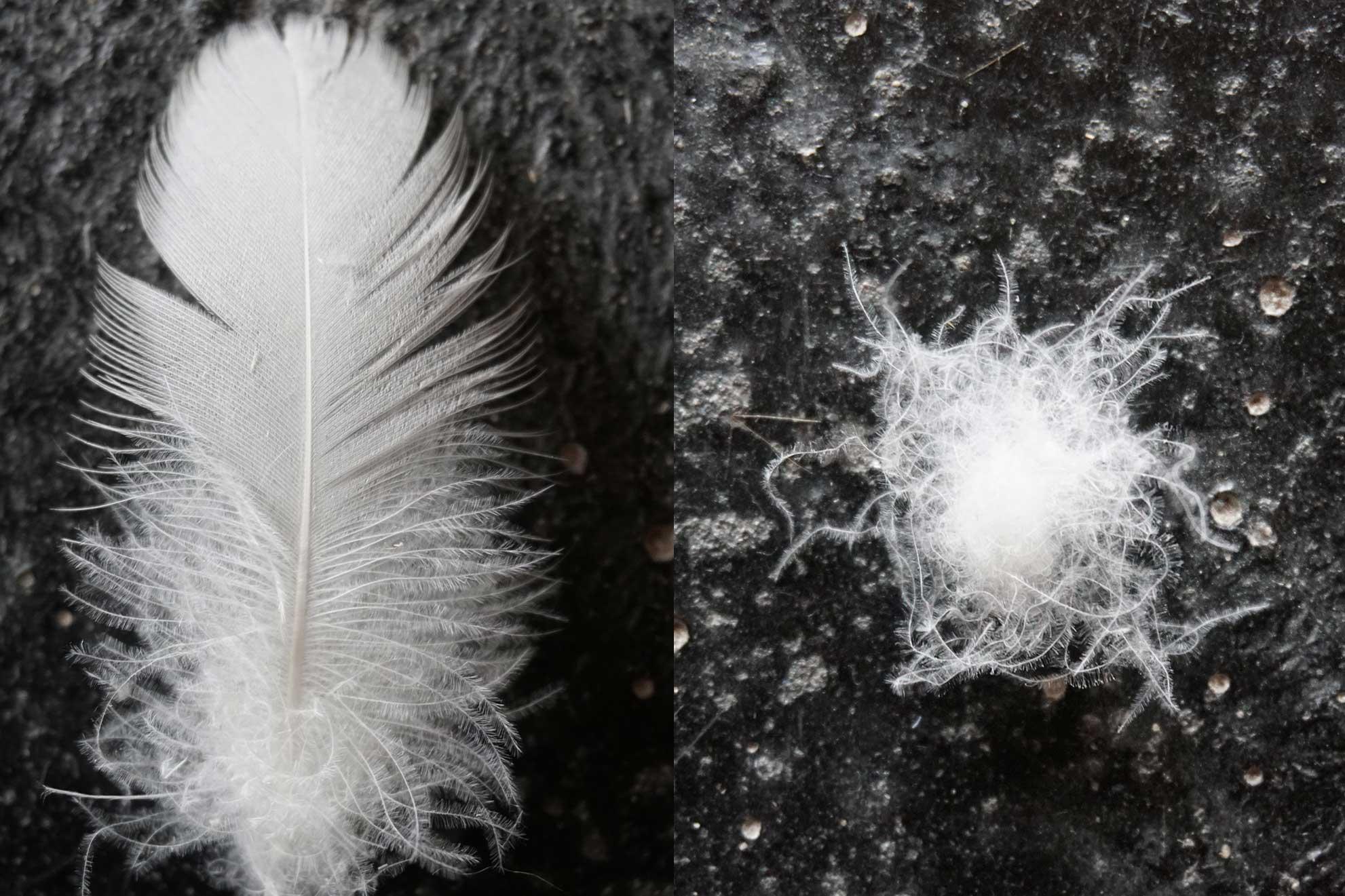 Federn und Daunen im Vergleich