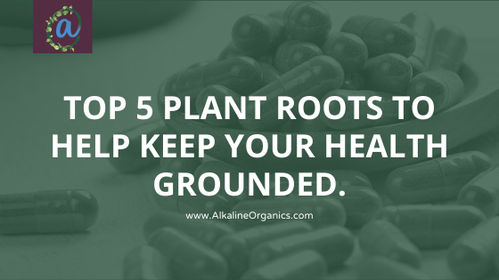 Top 5 Plant Roots To Help Keep Your Health Well Grounded.