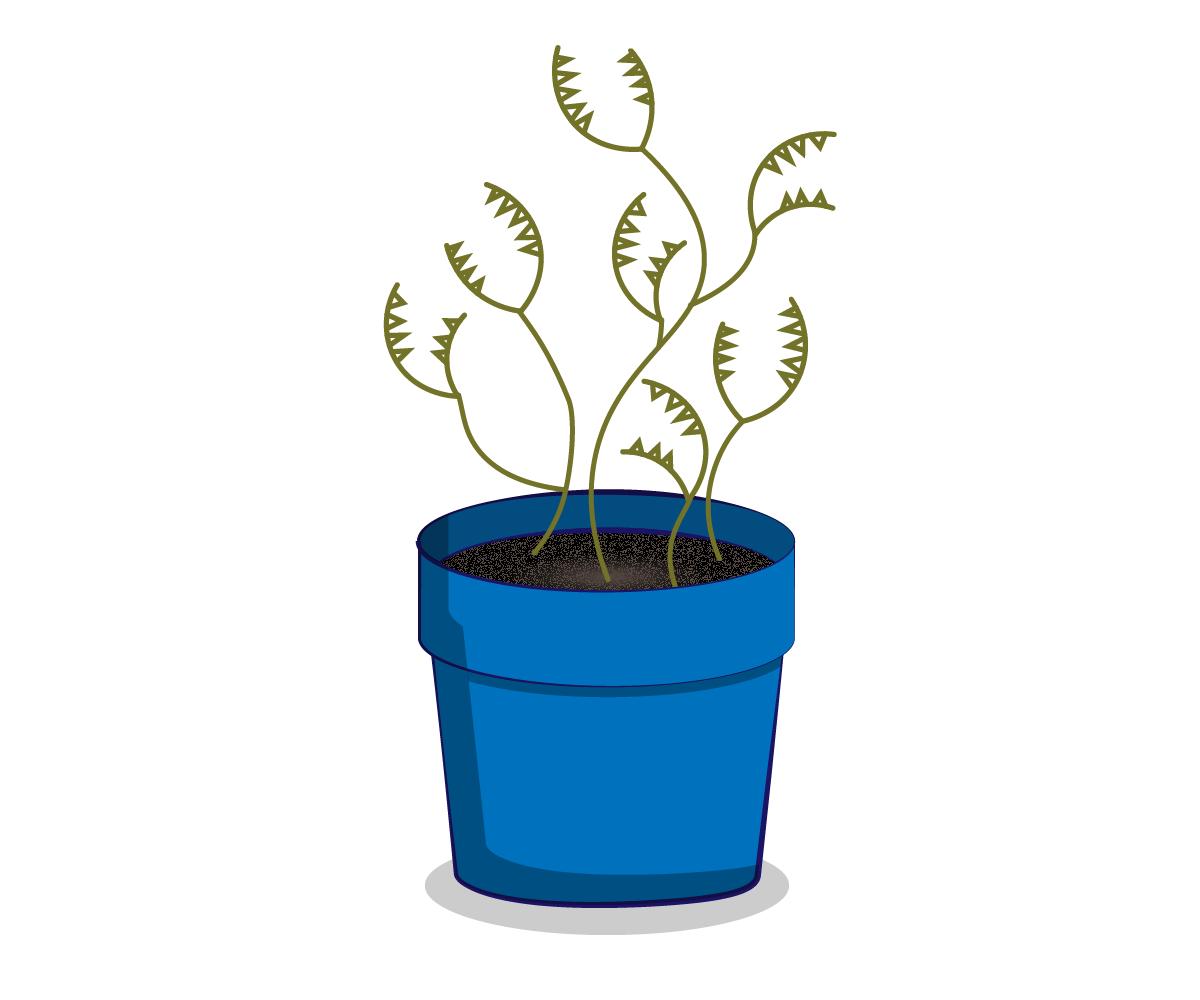 Planter Concept Sketch 01