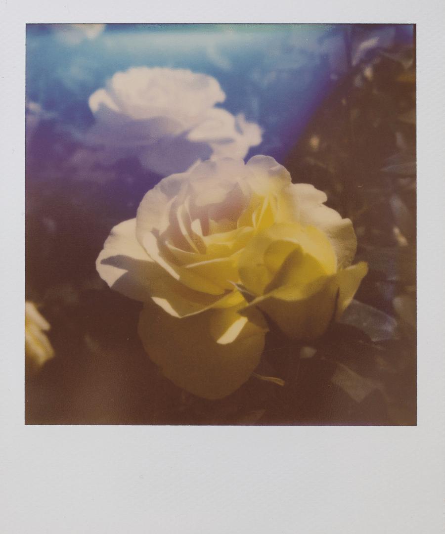 Polaroid Study Abroad Image