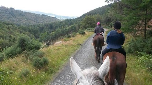 DLR Tourism, things to do: paddocks riding centre