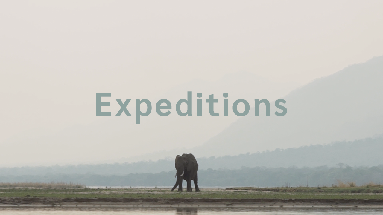 African Bush Camps | Expeditions