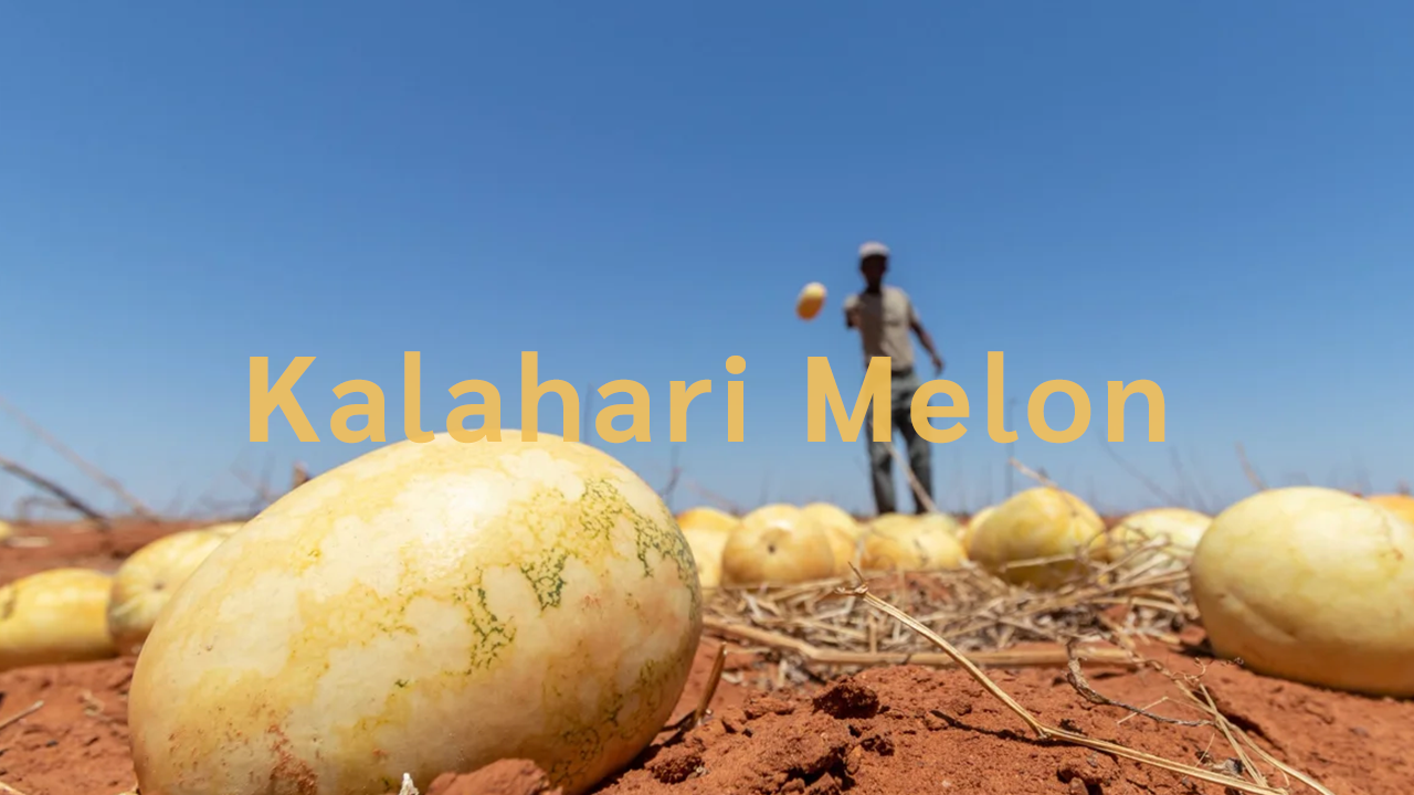 African Origin Oils | The Kalahari Melon