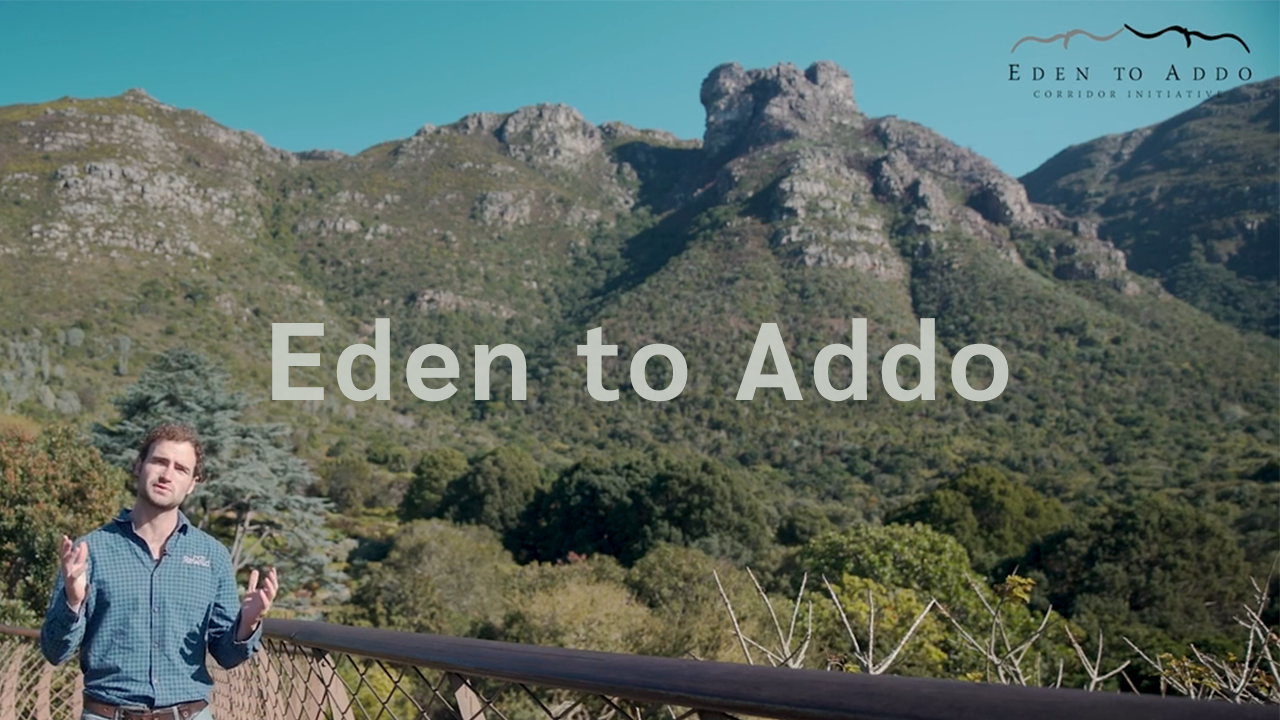 Rewild | Eden To Addo Corridor Proposal