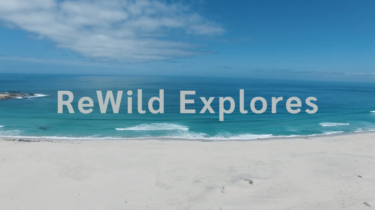 ReWild | Explores South Africa