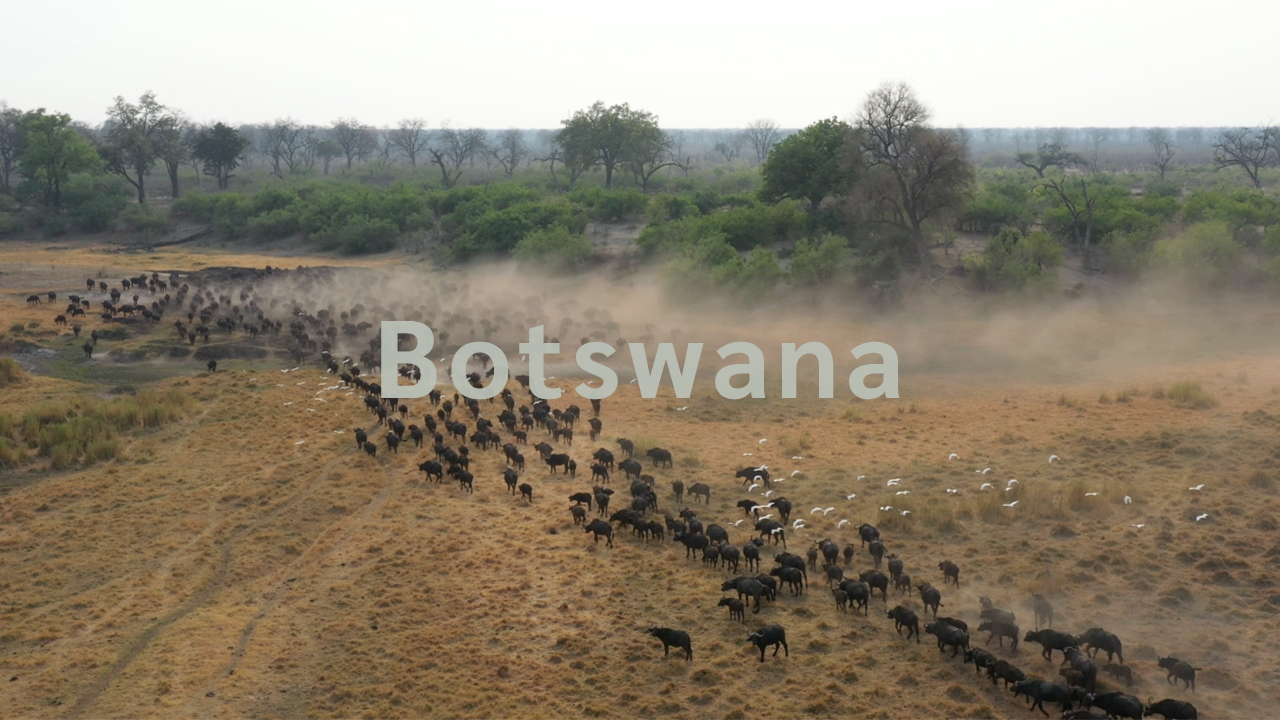 African Bush Camps | Beautiful Botswana