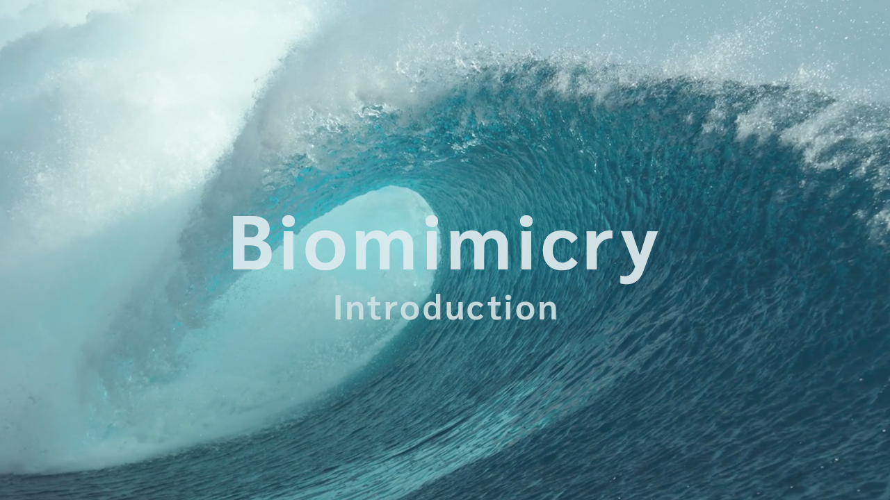 Biomimicry SA | Introduction to Biomimicry | Inspirational Videos