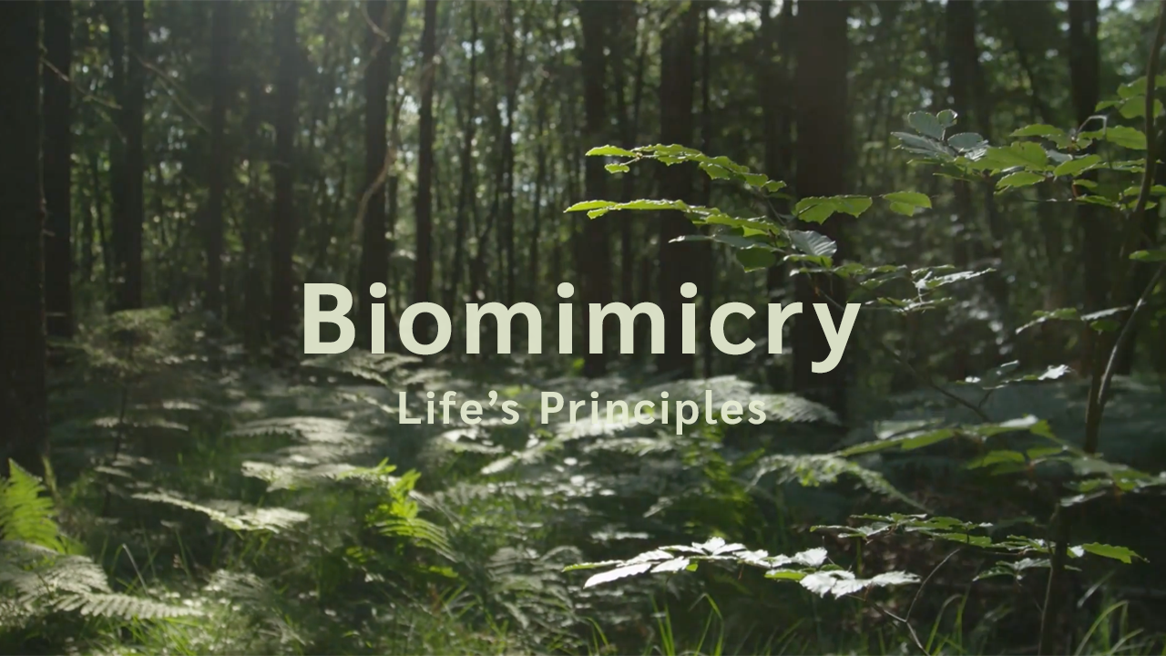 Biomimicry SA | Life's Principles | Inspirational Videos