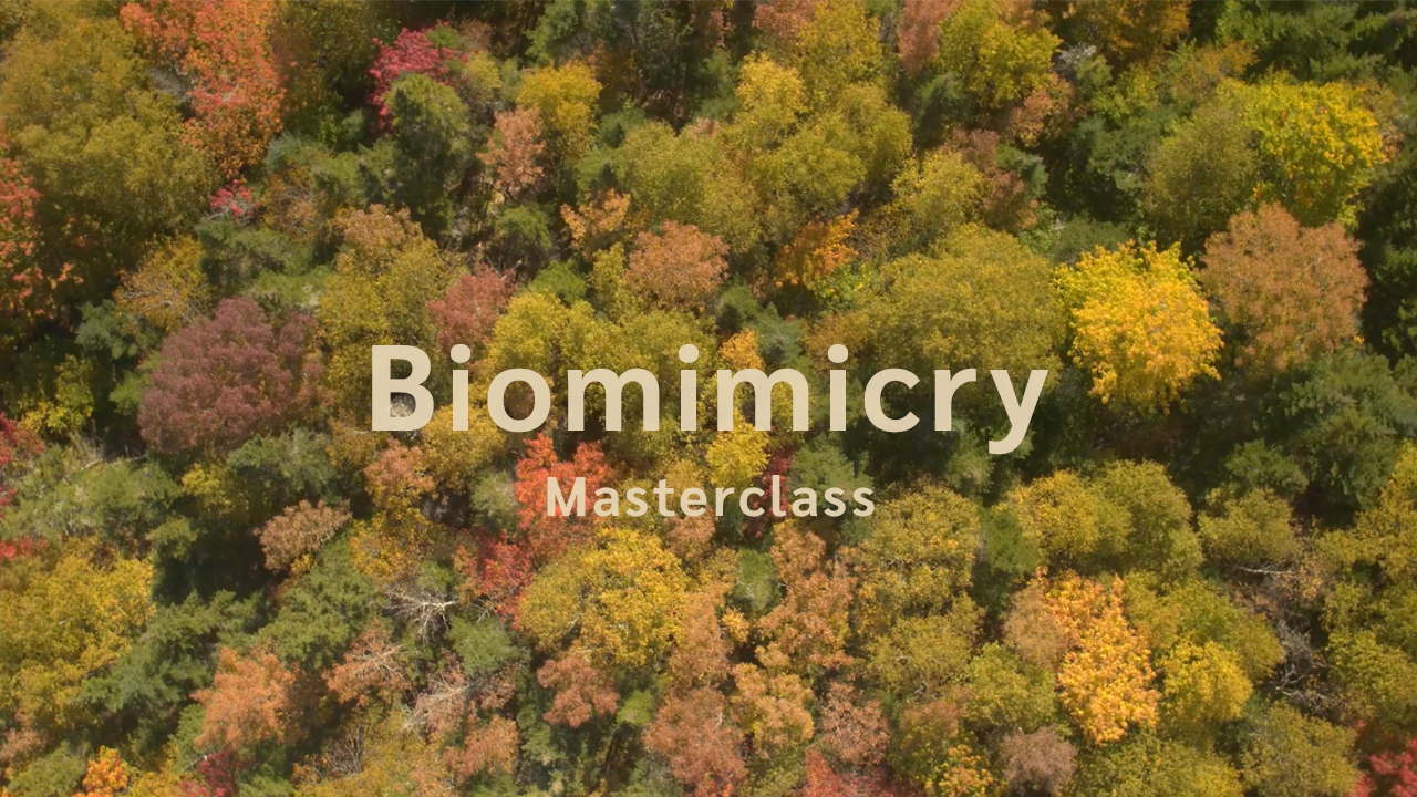 Biomimicry SA | Masterclass | Inspirational Videos