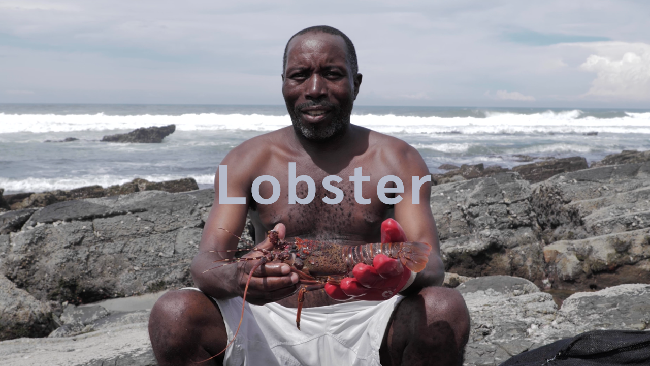 Marine Stewardship Council (MSC) | LOBSTER