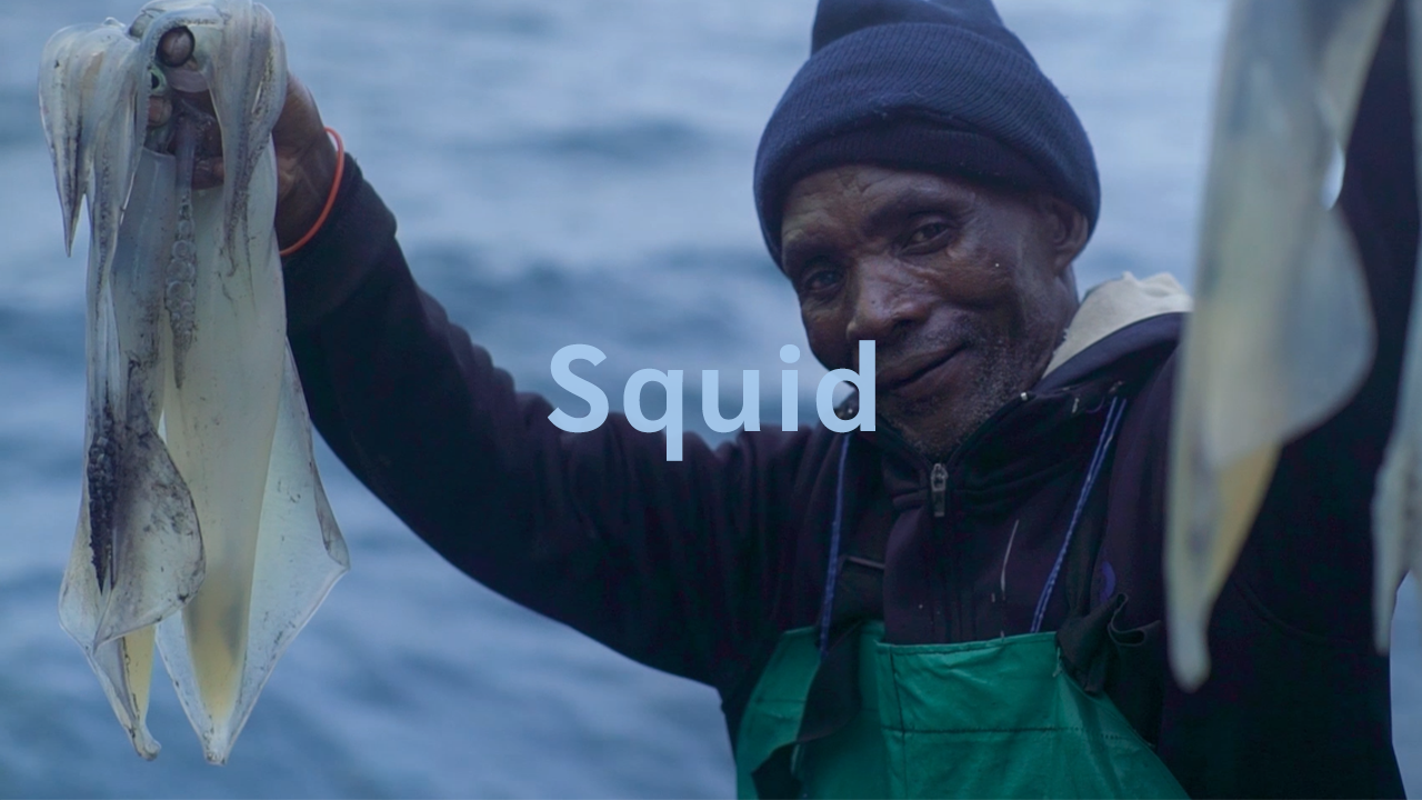 Marine Stewardship Council (MSC) | SQUID