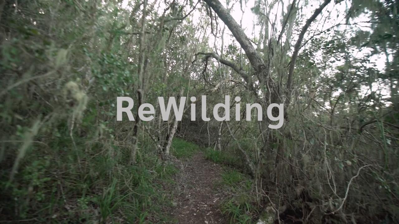 ReWilding | Stephen Harding