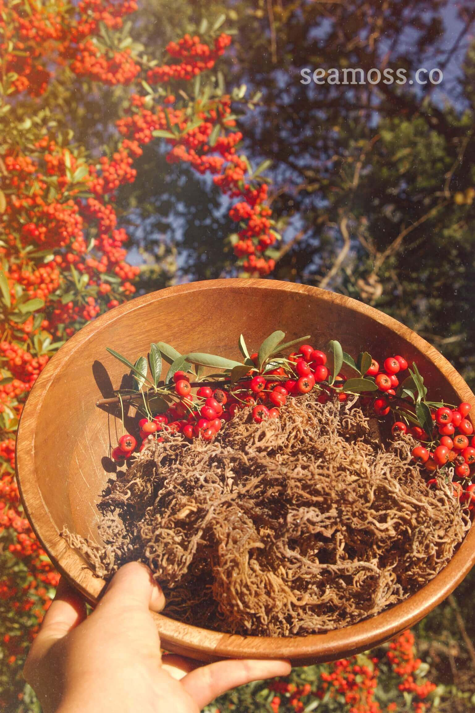 Beautiful Bowl of Sea Moss