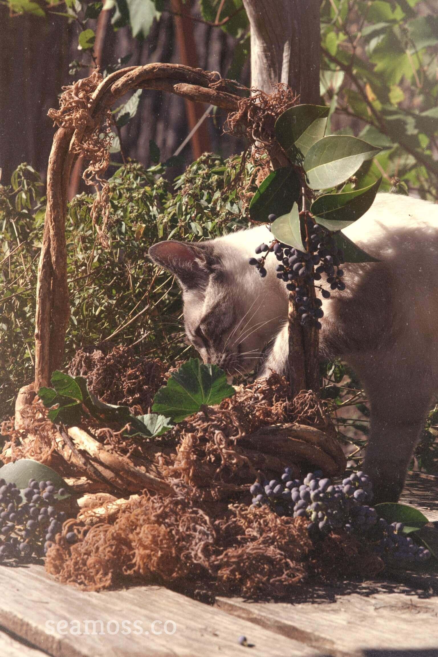 Beautiful Cat with Sea Moss