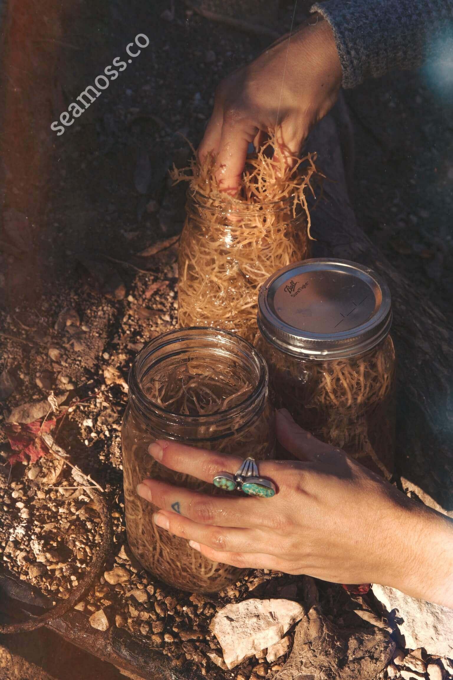 Mason Jars and Sea Moss