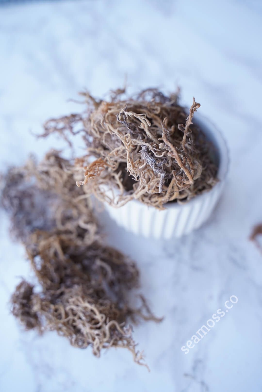 Overview of Wildcrafted Sea Moss