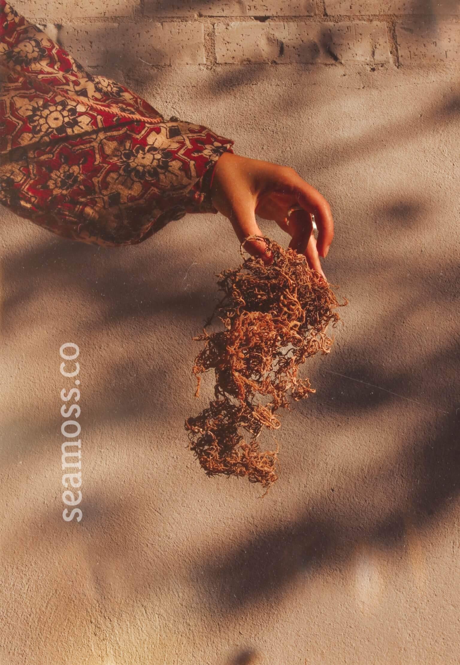 Paui Holding Sea Moss