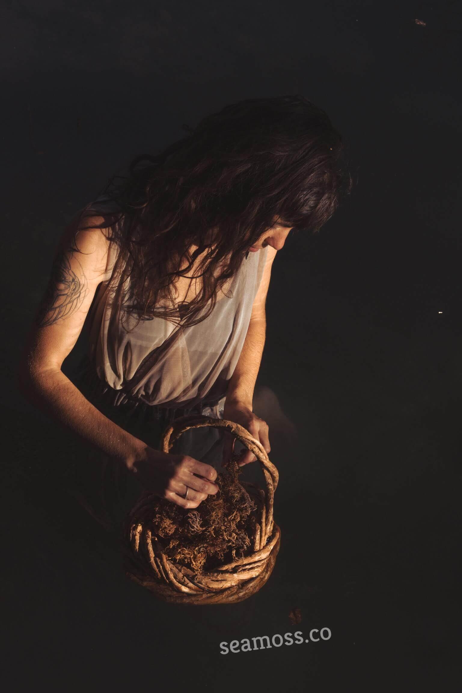 Sea Moss In a Basket