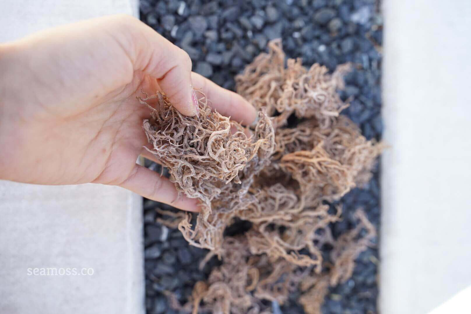 Sea Moss help above crystals