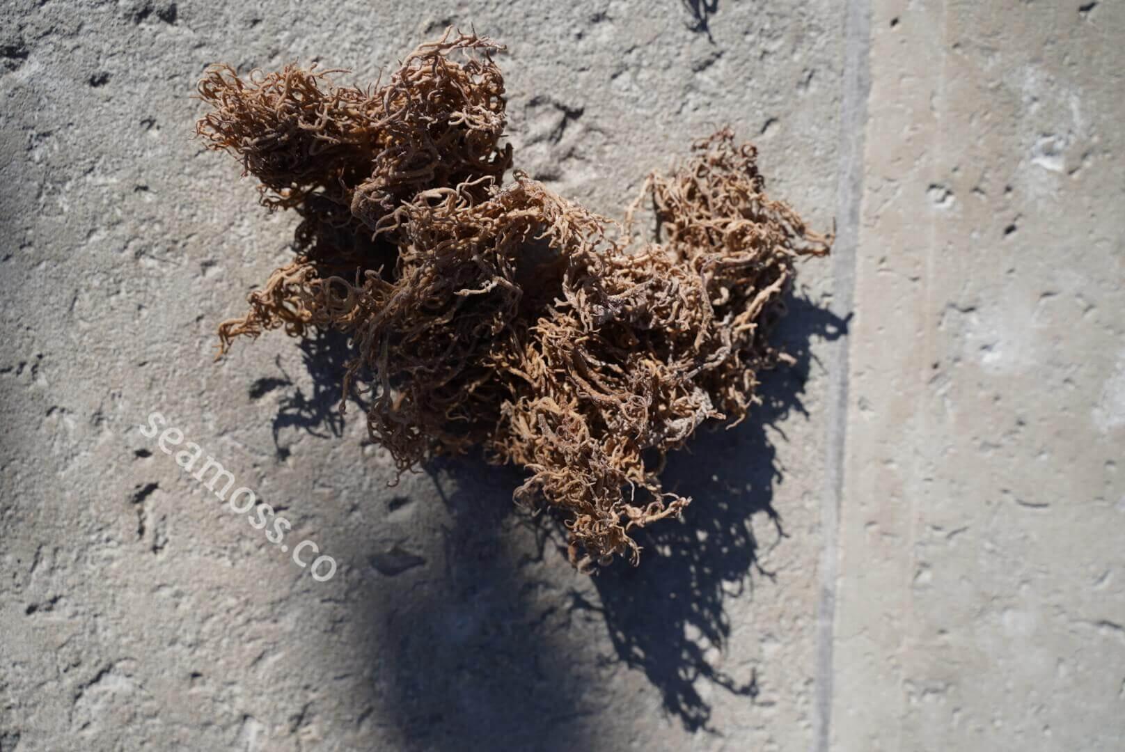 Sea Moss on Earthy Cement