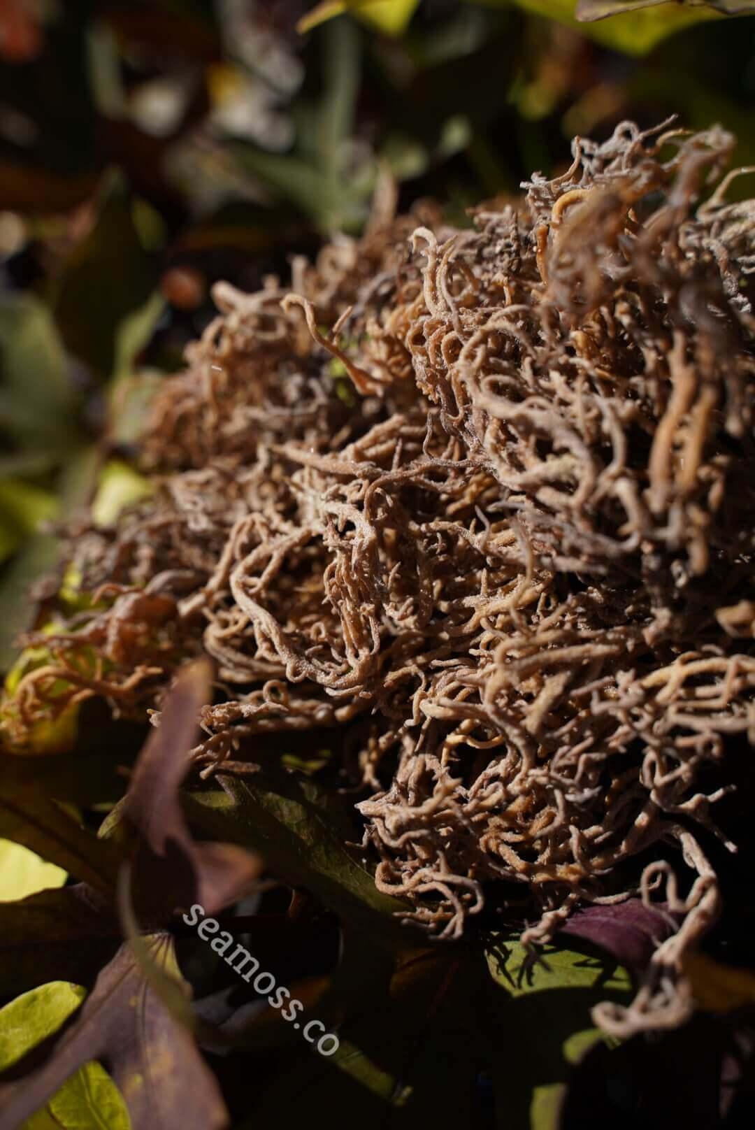 Plants and sea moss
