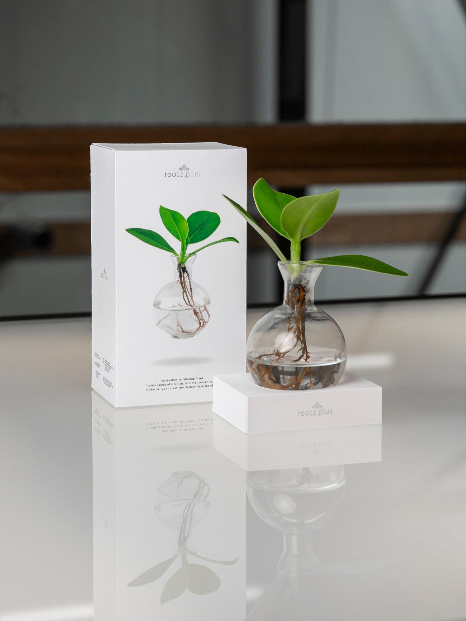 Studio Zakmes Rootz.Plus packaging design