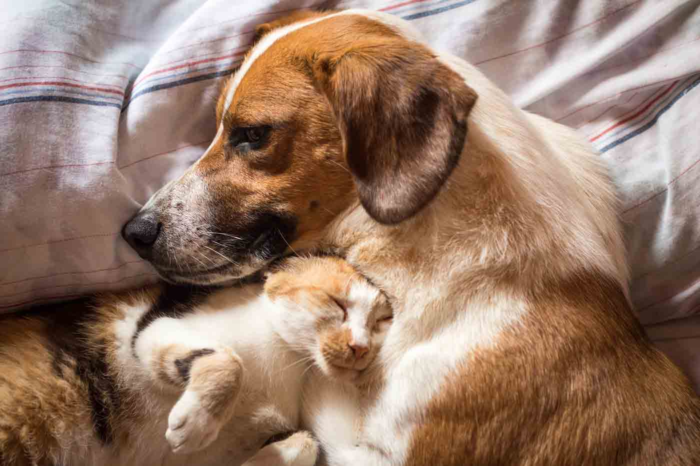 a cat cuddling with a dog laying on a bed