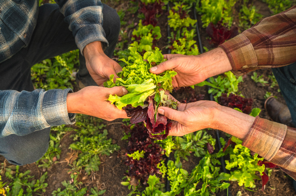 Locally grown produce is used in our salads and entrees