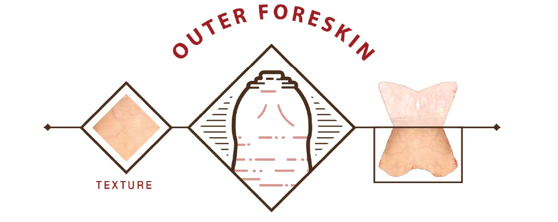 Segment illustrating the outer foreskin structure, texture and location in context of the overall foreskin anatomy.