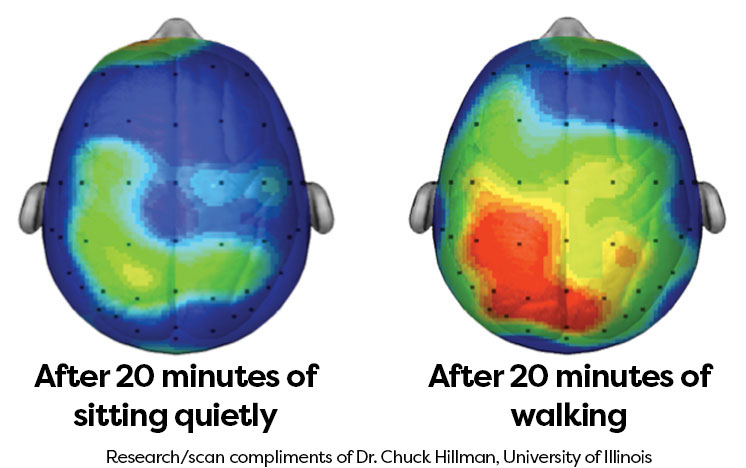 brain activity after exercise