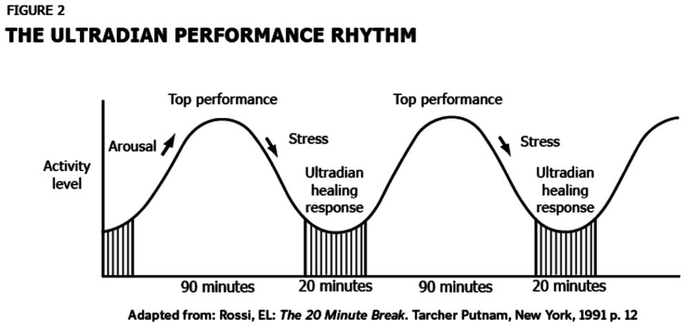 the ultradian performance rhythm