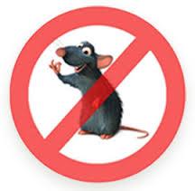 cara-mencegah-tikus-berkeliaran-di-rumah
