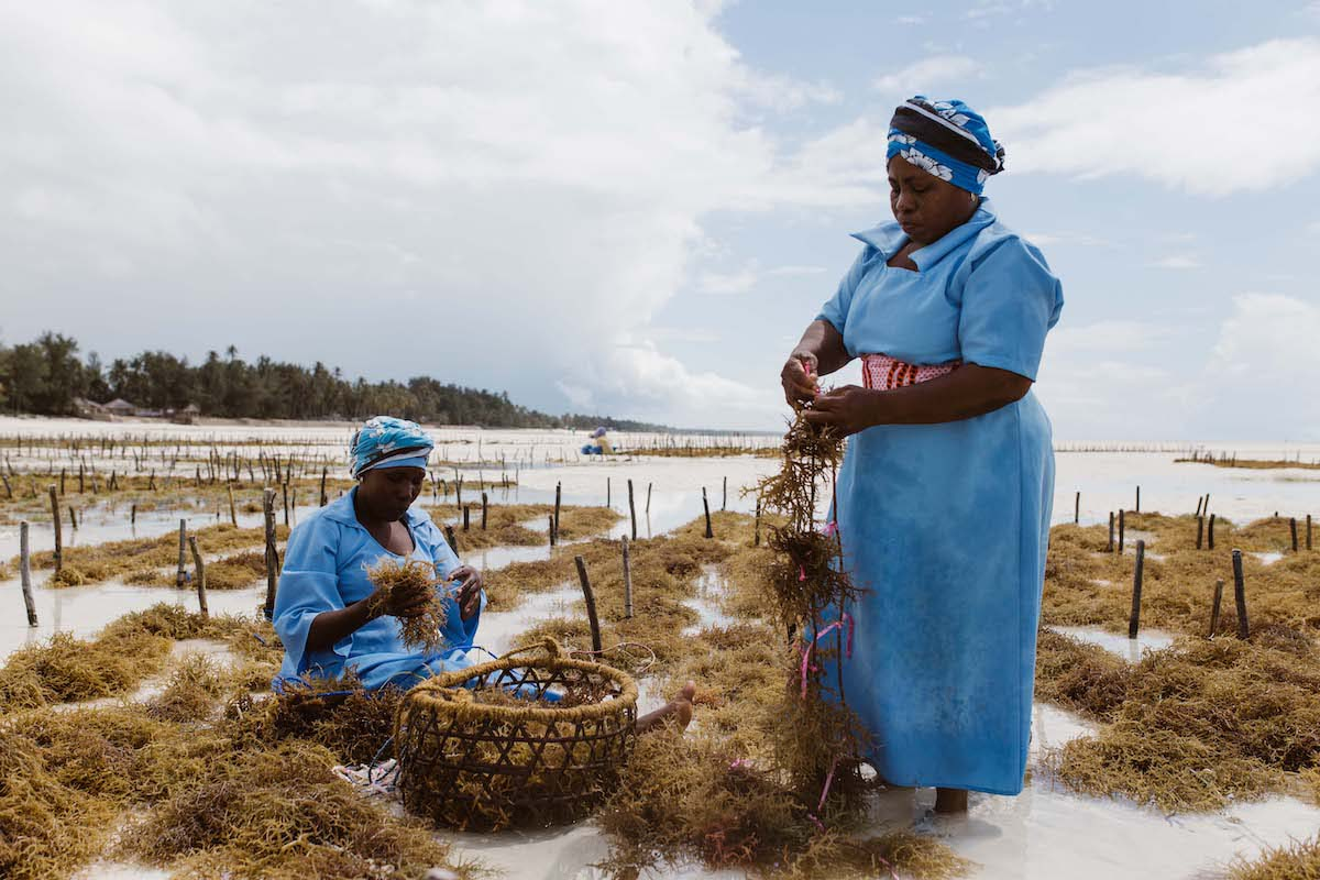 Women working on a farm, image by Sam Vox