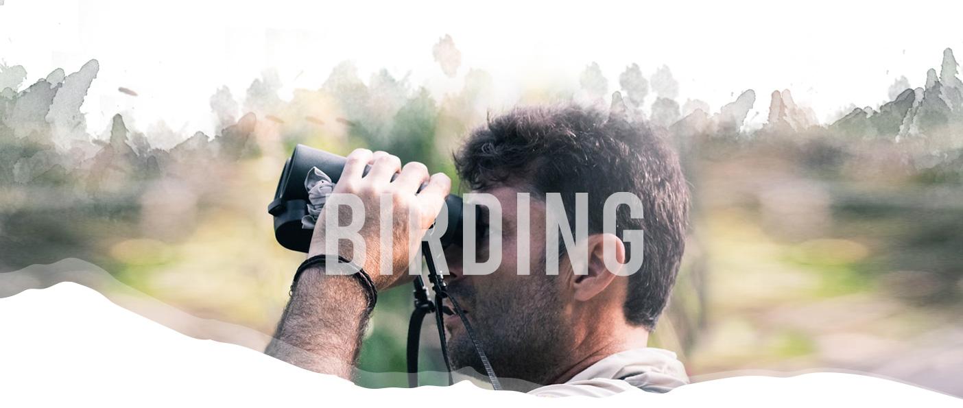 Birding header image